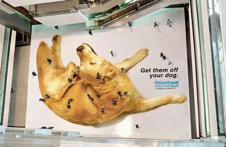 Махнете ги от вашето куче
